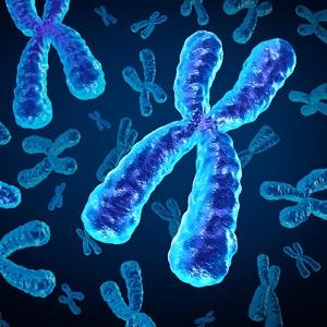 chromosomes_300w