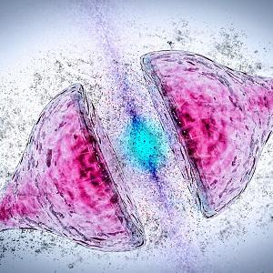 synapse-300w